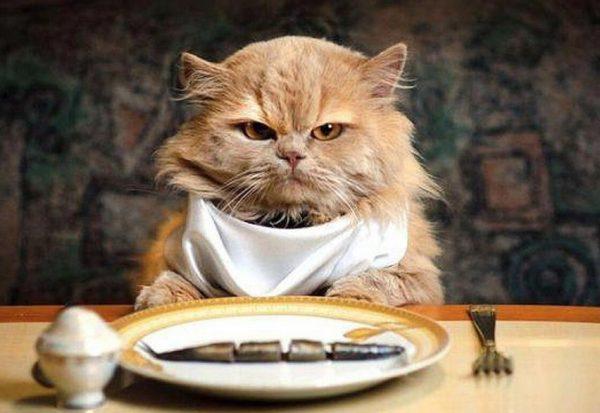 Какой кошачий корм лучший?