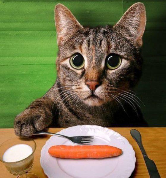Рейтинг супер-премиум питания для кошек