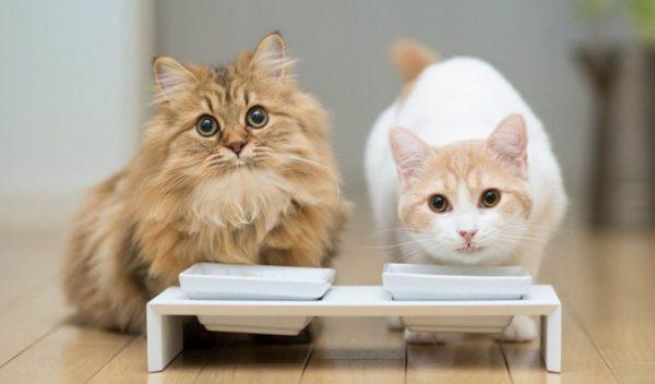 Рейтинг кормов-холистиков для кошек