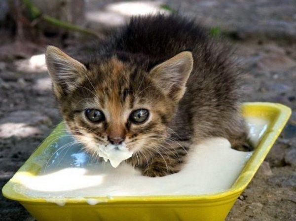 Цены на корма разных классов для кошек