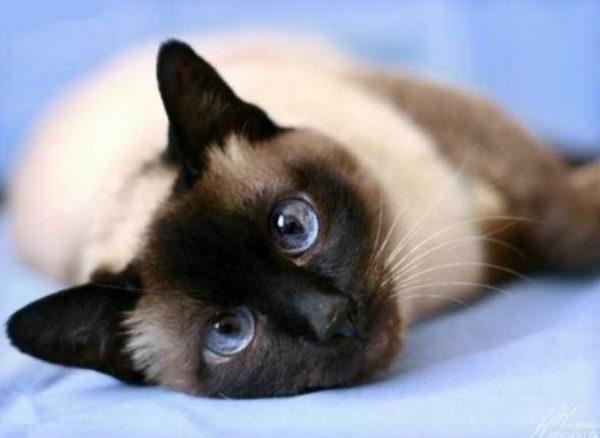 Стерилизация безболезненна и безопасна для животного, проводится под общим наркозом