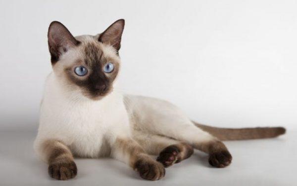 Обучать котенка нужно с детства, в этом возрасте он лучше поддается воспитанию