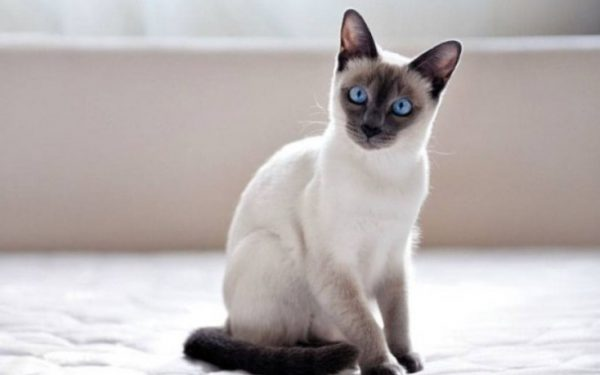 Беременность кошки обычно длится около 9 недель.