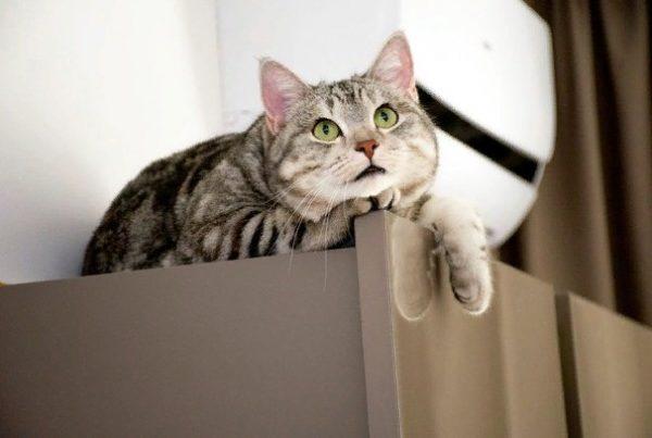 Котят продают как частные заводчики, так и питомники