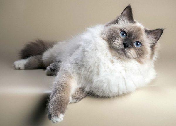 Для содержания кошек не требуется особых условий