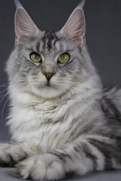 Рацион старых котов принципиально не меняется