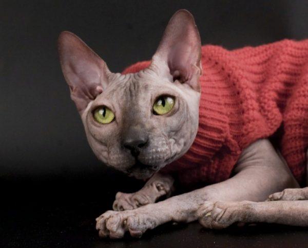 Кошку привозят к коту: вязка происходит на территории самца