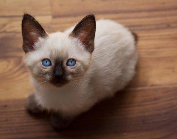 Кормление кошки во время беременности должно быть сбалансированным