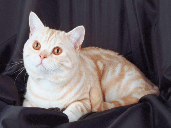 Кошка активная, сообразительная