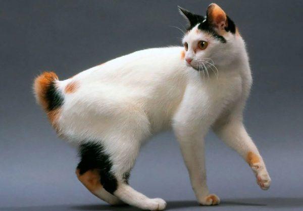 Кошку, не предназначенную для разведения, нужно стерилизовать
