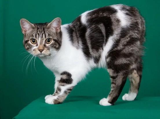 Средняя цена за котенка в рублях составляет 30000