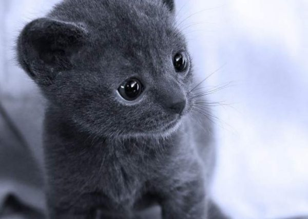 Котенок кората
