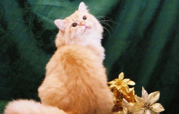 Кошки нуждаются во внимании, предпочитают общество человека