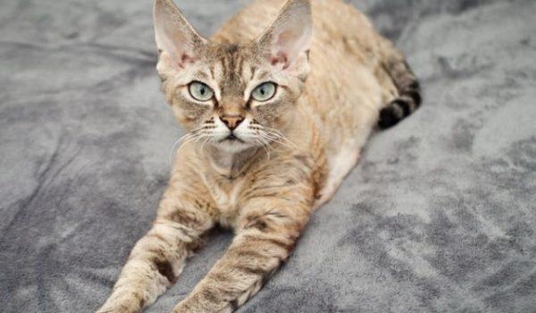 При выборе котенка обращают внимание на его внешний вид.