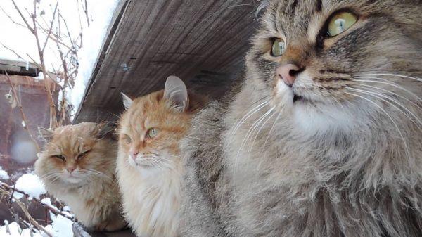 «Сибирякам» комфортно жить группой, они легко уживаются друг с другом