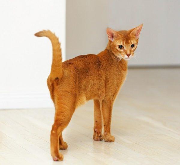 Кошки считают себя полноправными хозяевами в доме