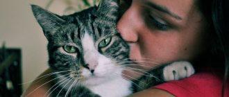Эозинофильная гранулема у кошек диагностика и лечение недуга
