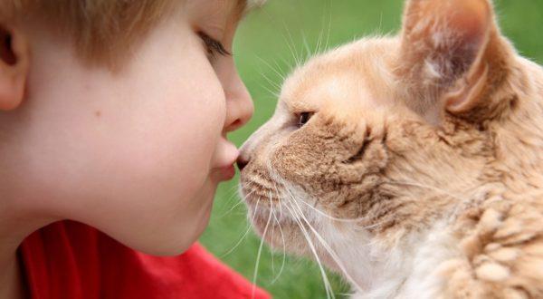 Ошибочное мнение, что заразиться кошачьими болезнями можно только от бездомных животных