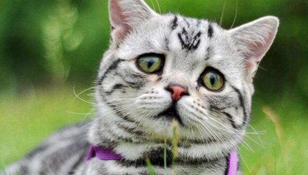 Желательно давать кошкам только термически обработанные продукты, особенно мясо