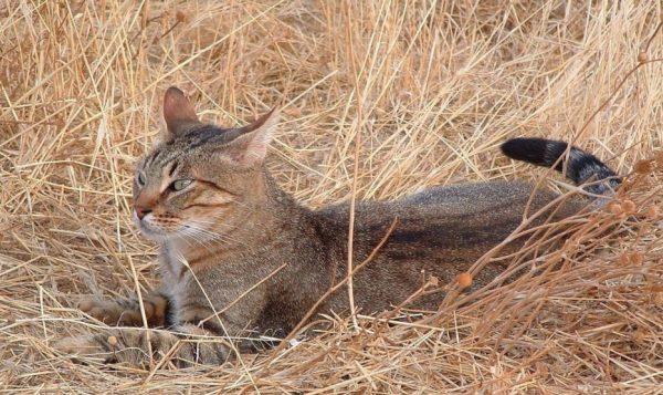 Риск заражения бешенством велик не только для других животных, но и для владельца