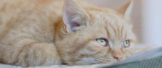 Фоспренил для кошек описание и практическое применение