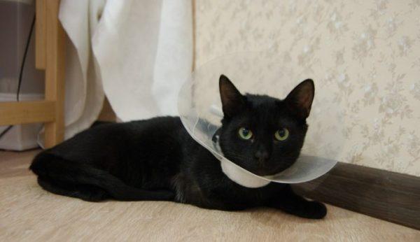 Подбирать лекарство и дозировку для лечения кошки должен только ветеринар