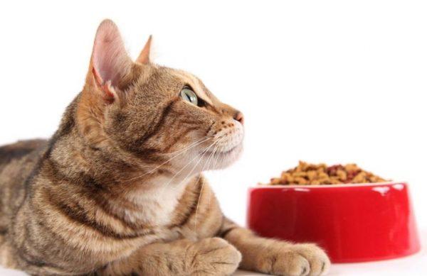 Если у вашего питомца хороший аппетит, он съедает всю порцию и просит ещё, не идите у него на поводу