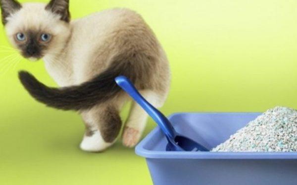 Антигадин не поможет с одного применения, может пройти много времени, прежде чем котёнок начнёт ходить в лоток