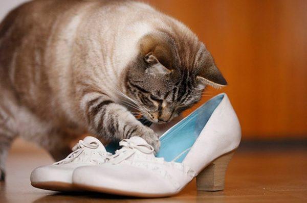 Если в квартире проживают другие питомцы, важна консультация ветеринара: он подберет средство, безвредное для всех домашних животных