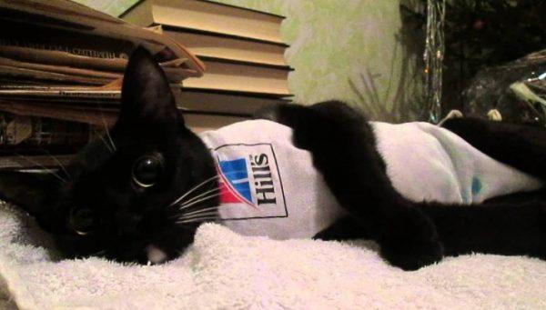 Стерилизация – это стрессовая процедура для кошки, после которой меняется ее гормональный фон и поведение