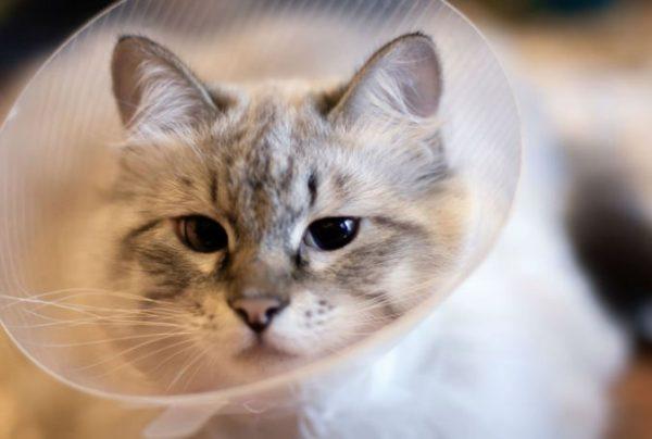 Важно, чтобы у кошки постоянно была чистая вода