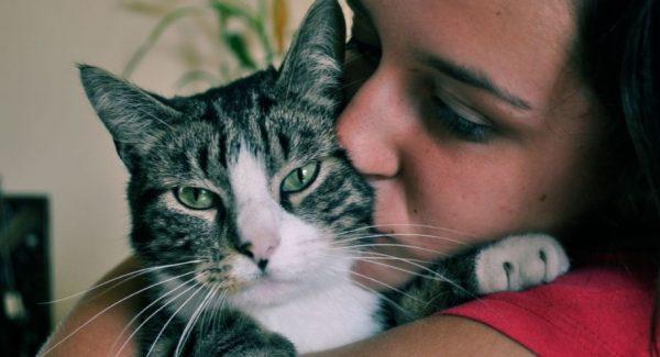 Токсоплазмоз у кошек, может угрожать и человеку