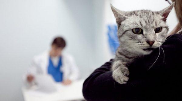 Токсоплазмоз можно диагностировать только в ветеринарной лаборатории