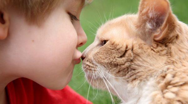 Не нужно целовать кошек или брать их в свою кровать