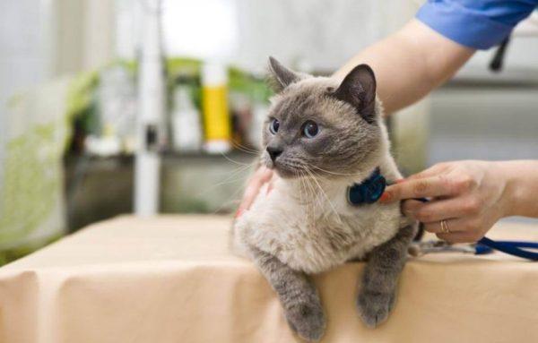 В группе риска находятся кошки возрастом до двух лет и старше десяти.