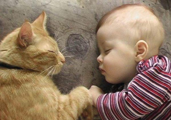 Главными составляющими характера кошек являются правильное воспитание и наследственность