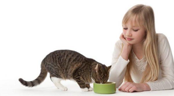 Есть неполезные кошкам злаки, которые нужно исключить из рациона