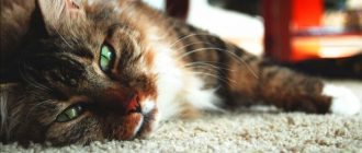 Цефтриаксон для кошек: инструкция по применению, уколы как разводить, дозировка