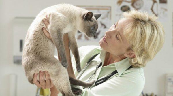 Как профилактика Фоспренил прописывается кошкам, которые имели контакты с больным животным