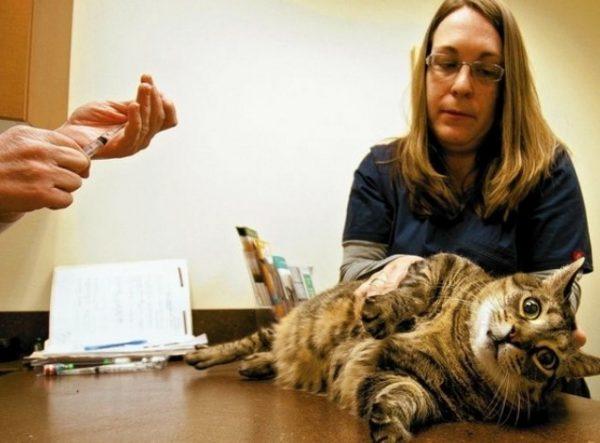 Противопоказанием для использования Фоспренила является индивидуальная непереносимость животным