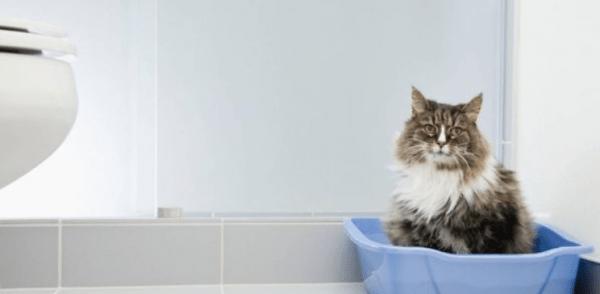 Цистит у кота является тяжёлой патологией