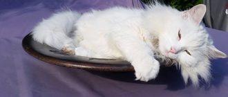 Канефрон для кошек при хпн