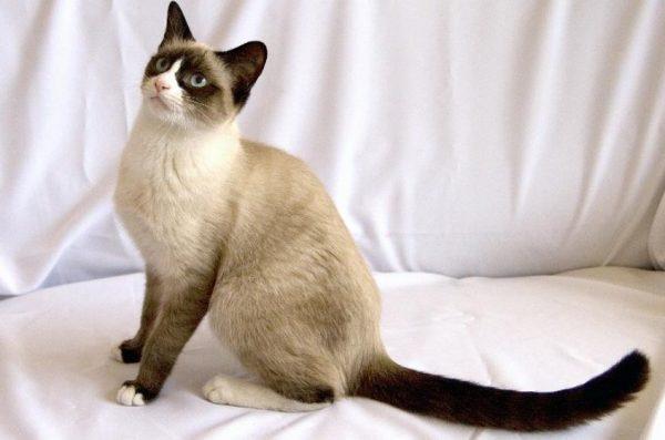 Котенок может подстраиваться под настроение владельца