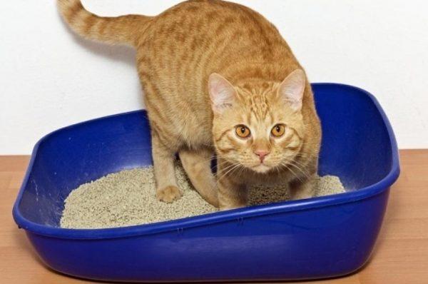 Понос у кошек развивается достаточно часто