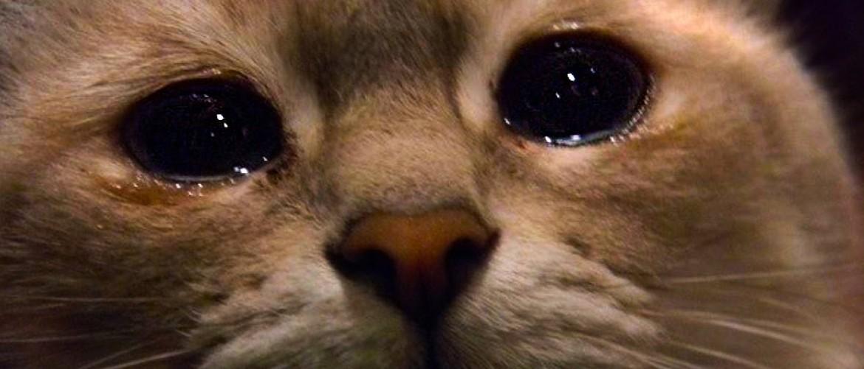 Как узнать кого в семье больше любит кошка