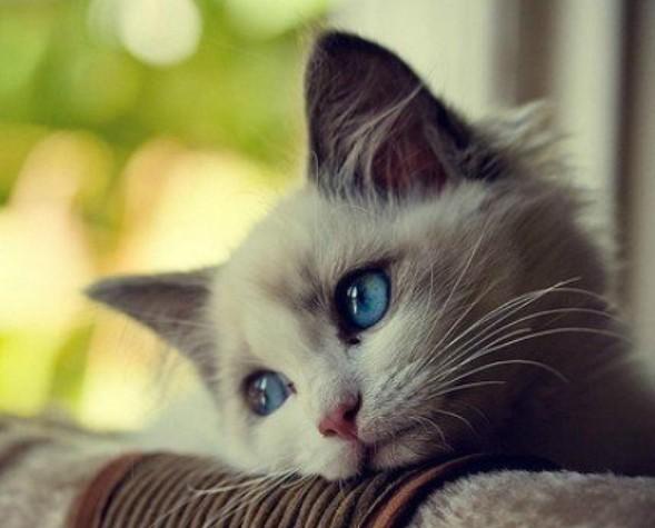 Представители кошачьих выражают эмоции каждый по-своему
