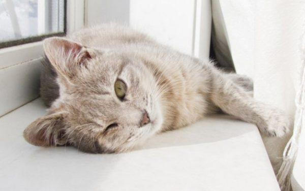 Коты поддерживают зрительный контакт только с теми людьми, которые им нравятся