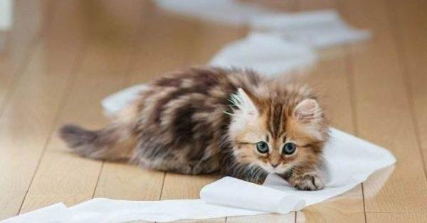 Лучший возраст для приучения котенка к лотку – период от 3 до 8 месяцев