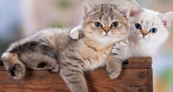 Если не желаете появления котят – стерилизуйте одного питомца