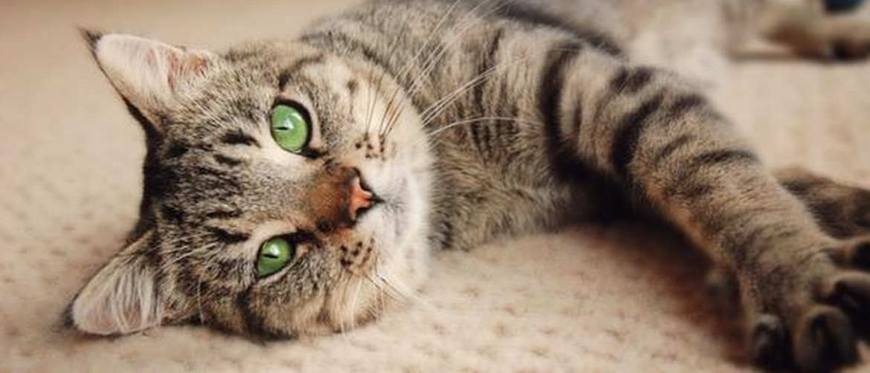 Кот отказывается от еды рвота что это thumbnail